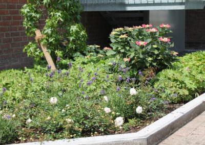 Beemelmans Garten & Landschaftsbau in Goch | Pflanzen & Gewächse in den schönsten Farben